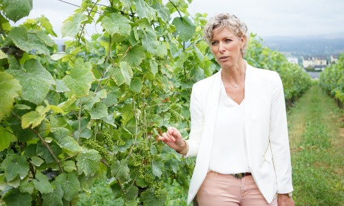 Domaine Mathis Bastianのワイン畑の説明