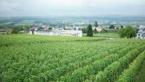 Domaine Mathis Bastianのワイン畑