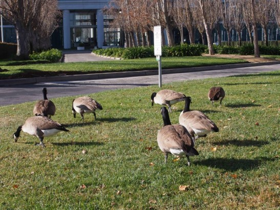 Oracle(オラクル)には鳥がいっぱい