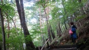 森の中のコテージ