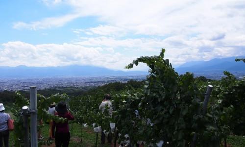 ワイン畑で説明をうける