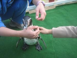 ふれあいペンギン