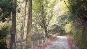 旧天城トンネルへの道