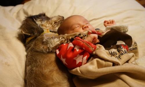 犬と一緒に寝る直人