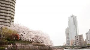 隅田川お花見クルージング