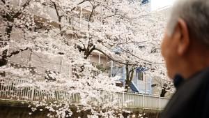 桜がとてもきれい隅田川クルージング