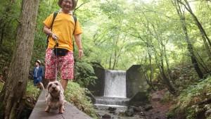 スィートグラスの森を犬と散歩