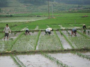 14 農業婚活