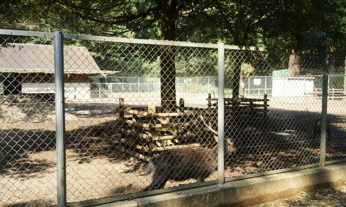 鹿島神宮の鹿園