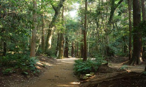 鹿島神宮の要石への道